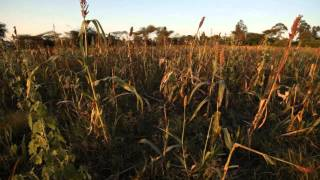 preview picture of video 'Agroforestry in Kenya is supporting both climate adaptation and mitigation'