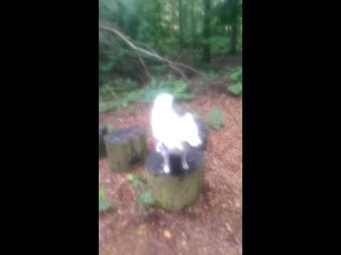 Kaysa sa pagpapagamot ng balat ng halamang-singaw at lumot