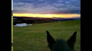 Krásný je život s koňmi
