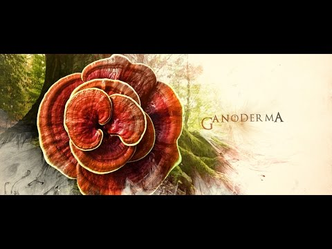 GANODERMAstory™ History, Life and Benefits of the KING of HERBS.
