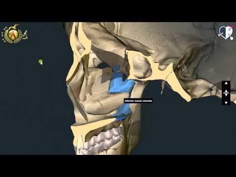 Le articolazioni degli arti inferiori e la loro anatomia
