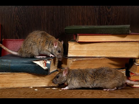 Tips to Rodent Proof Your Home