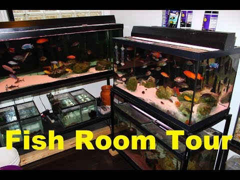 FISH TANK AQUARIUM ROOM TOUR