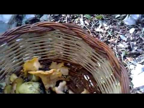 Trattamento di un fungo su catrame di betulla di unghie