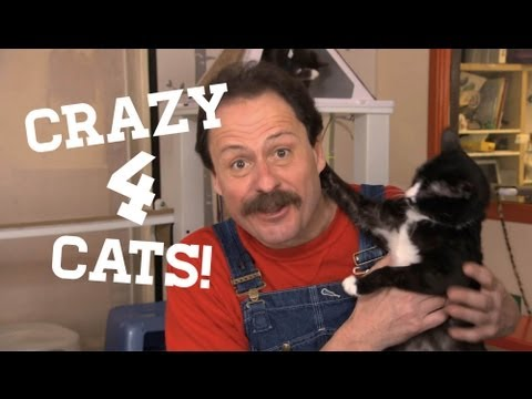 Frugal Felines | The Cheap Life with Jeff Yeager | AARP