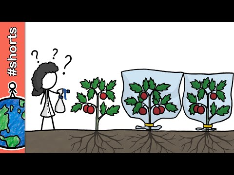 Como as plantas se protegem de predadores? #shorts