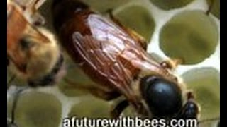 Splitting a honey bee hive too early with winter bees PART 2