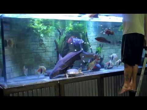 Monster Aquarium 1100g Feeding