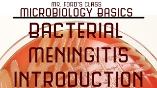 Introduction To Bacterial Meningitis : Microbiology Lectures