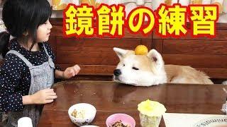 秋田犬 鏡餅の練習 次回はシェパード犬