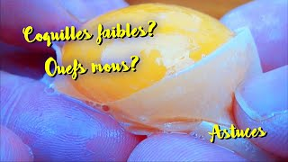 Coquilles D'œufs Faibles ? Pourquoi Et Quoi Faire ?