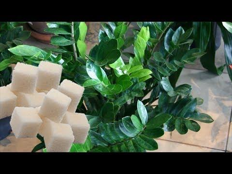Сладкая подкормка – в холодное время важная процедура для комнатных растений.