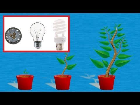 Normale Lampe als Pflanzenlampe verwenden - LED & Energiesparlampe für Zimmerpflanzen Beleuchtung