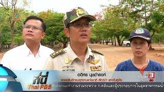 ที่นี่ Thai PBS - ที่นี่ Thai PBS : ค้าเสือ