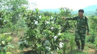 Triển khai Luật An toàn, vệ sinh lao động: Bảo đảm quyền lợi cho người nông dân