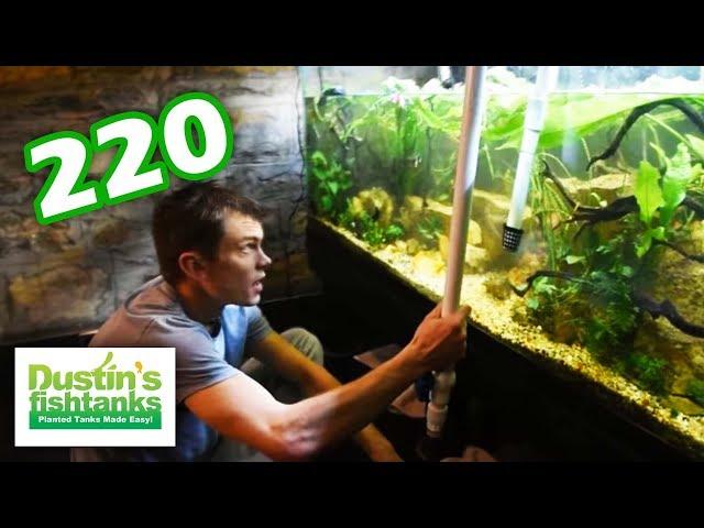 Planted Aquarium Maintenance: 220 Design Action