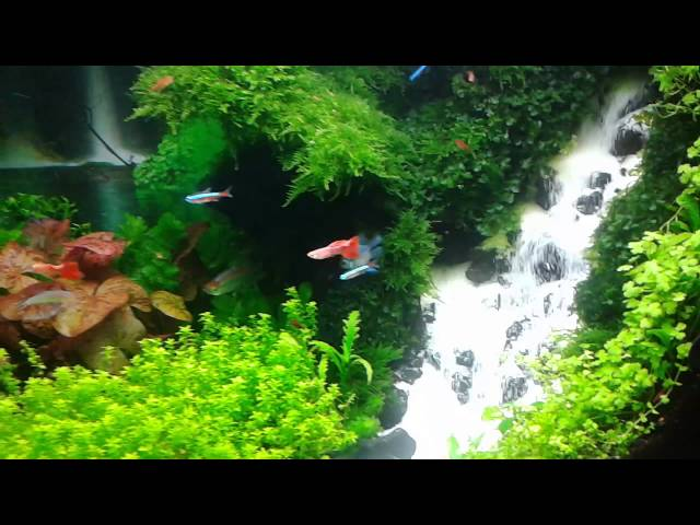 Aquascape Waterfall