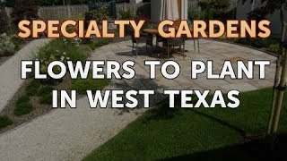 Flowers to Plant in West Texas
