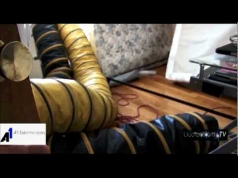 Best Way to Kill Bedbugs: Bed bug Extermination by A1 Exterminators