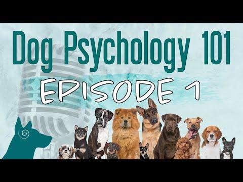 Podcast Ep. 1 | Dog Psychology vs. Human Psychology (Natural Dog Behavior)