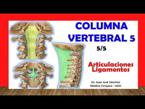 Complejo de tratamientos de columna vertebral Essentuki