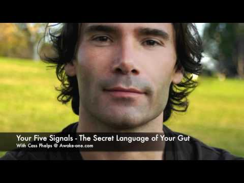 Five Signals Into - The Secret Language of Your Gut