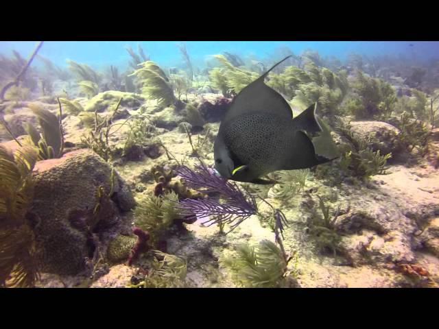 Key Largo - Molasses Reef Dives 2013