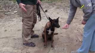 Смотреть онлайн Как отучить собаку брать еду с чужих рук