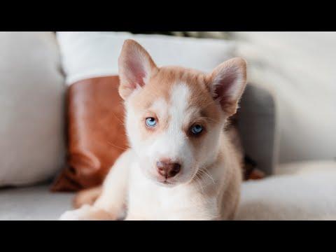 Hogyan lehet lefogyni egy labrador kutyan. Súlycsökkentő termék az ipn tv-ből