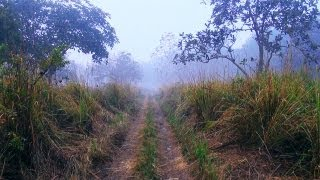 On the way to Mathanguri Forest, Assam