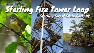 Sterling Fire Tower Loop Hike | Sterling Forest State Park, NY