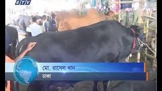 Cow Hat News Ekushey Television Ltd 30 08 2017
