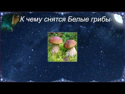 К чему снятся Белые грибы (Сонник)