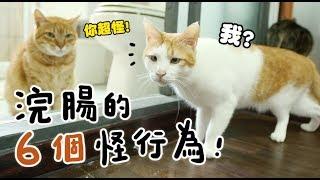 【黃阿瑪的後宮生活】浣腸的6個怪行為!