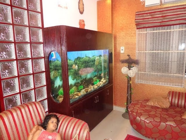 Aquarium Chennai's Traditional Setup with Discus fish and tetras fishes.