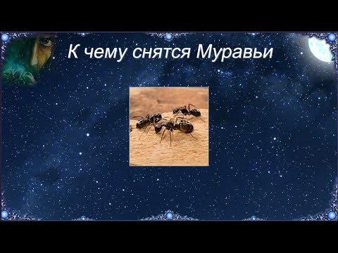 К чему снятся Муравьи (Сонник)