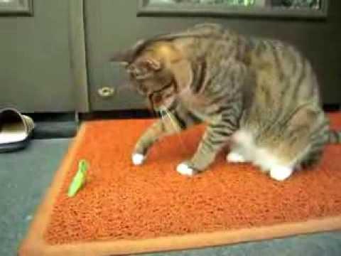 貓貓拳 VS 螳螂拳