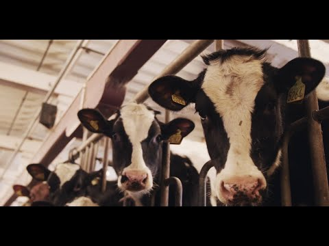 3D sensor supports fully automated milking system