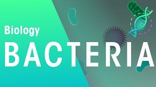 Bacterial Disease | Health | Biology | FuseSchool