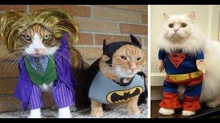 Лютые костюмы для котов. Кот с бензопилой!!!