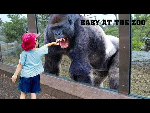 When Kids Go to the Zoo, Hilarity Ensues
