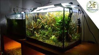 Akwarium 50l - ponad 3 lata od zalania. Akwarium roślinne