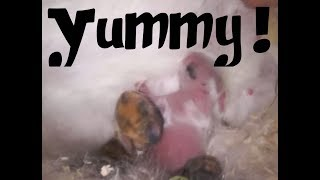RABBITS - How New Born Rabbits Are Fed. What Do They Need?
