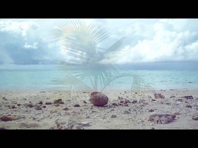 Palmtree Video