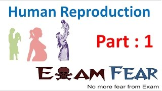Biology Human Reproduction part 1 (Introduction) class 12 XII