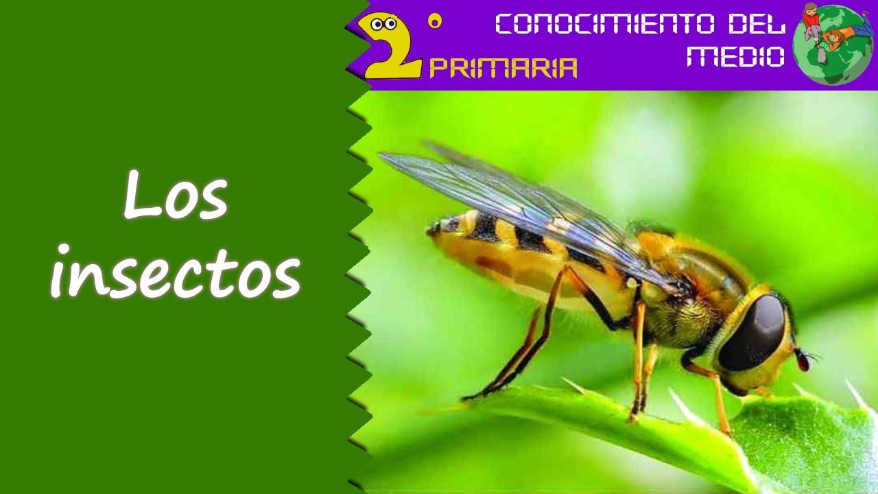 Cono, 2º Primaria. Tema 5. Los insectos