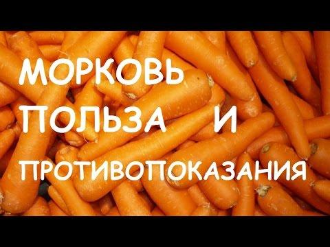 Морковь. Польза и вред для организма.