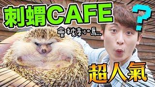 【全球首間刺蝟CAFE♡ 】3000円一小時餵「活生生的蟲」!?[中文字幕]