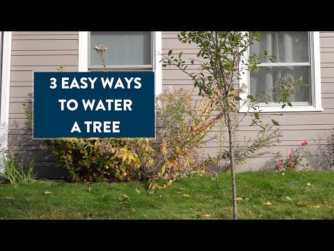 How to Water a Tree