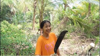 Em Gái Quê Dám Giật Cưa Máy Đốn Nguyên Cây Dừa Về Nấu Lẩu - Em Gái Quê - Bến Tre